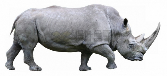 走路的黑犀牛png图片素材