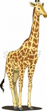 站立的卡通长颈鹿png图片素材