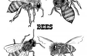 手绘黑色素描风格不同角度的蜜蜂配图免抠矢量图片素材