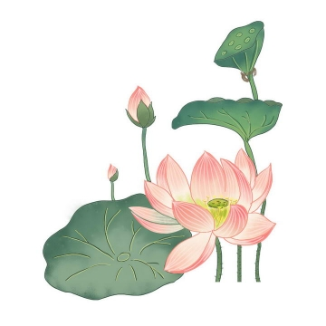 彩色手绘简约风格夏天里的荷花荷叶和莲蓬图片免抠素材