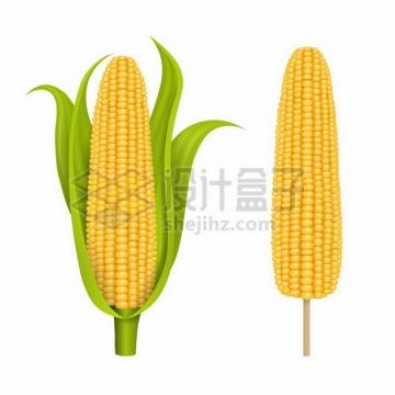 逼真的玉米棒子542944png图片素材