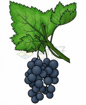 卡通绿叶下的紫色葡萄png图片素材