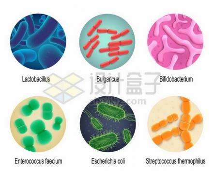 显微镜下的乳酸菌保加利亚乳杆菌双歧杆菌屎肠球菌大肠杆菌嗜热链球菌png图片素材