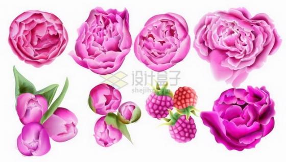 粉红色玫瑰花郁金香花朵鲜花花卉水彩插画png图片免抠矢量素材
