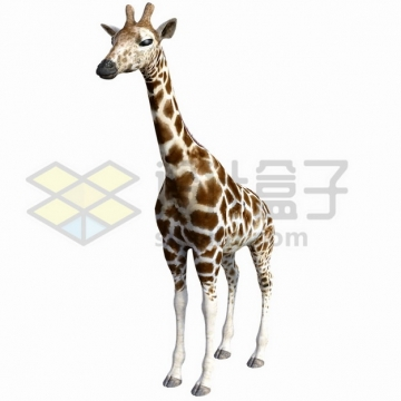 眯眼的长颈鹿png图片素材