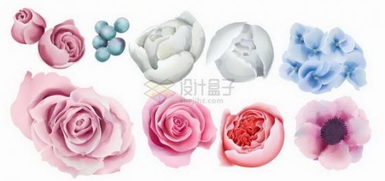玫瑰花牡丹花兰花等鲜花花卉花朵水彩插画png图片免抠矢量素材