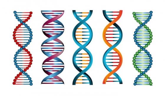 5种不同风格的脱氧核糖核酸DNA双螺旋结构中学生物教学图片免抠矢量素材