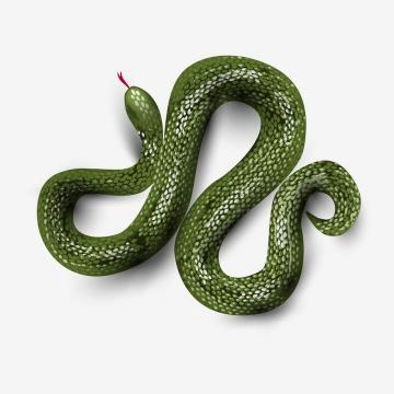 一款青色的毒蛇图片免抠素材