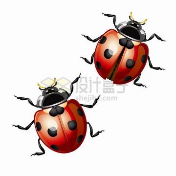 两只水晶风格的七星瓢虫甲壳虫小昆虫png图片免抠矢量素材