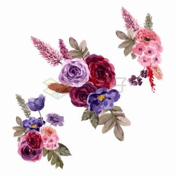 紫红色玫瑰花牡丹花番红花等花朵鲜花水彩画花卉png图片免抠矢量素材