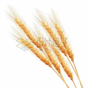 一把小麦麦穗387011png图片素材