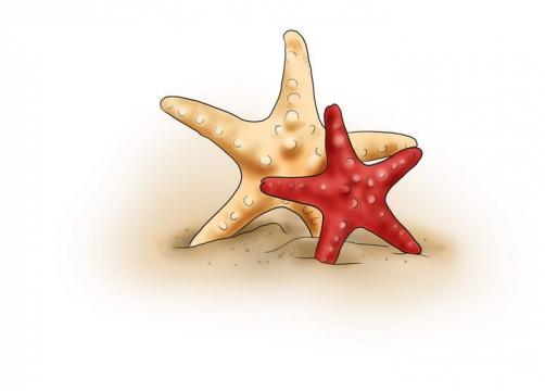 手绘风格在沙子里的海星海洋生物图片免抠素材