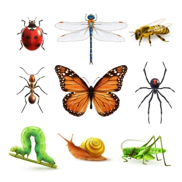 逼真的七星瓢虫蜻蜓蜜蜂蚂蚁蝴蝶蜘蛛毛毛虫蜗牛蚂蚱等昆虫小动物免抠矢量图片素材