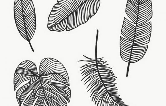 5款黑色线条羽毛和树叶图片免抠素材