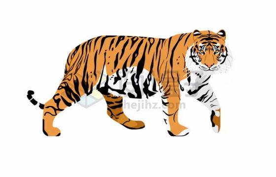 散步的老虎东北虎插画png图片素材