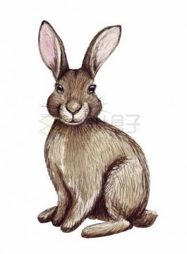 彩绘风格野兔小兔子野生动物png图片免抠矢量素材