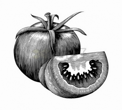 切开的西红柿番茄美味水果蔬菜手绘素描插画png图片免抠矢量素材