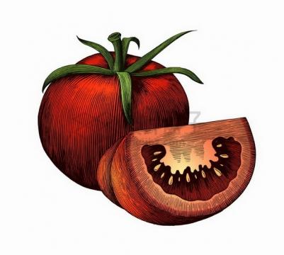 带叶子切开的西红柿美味水果蔬菜彩绘素描插画png图片免抠矢量素材
