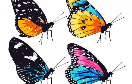 4款七彩斑斓的蝴蝶翅膀免抠矢量图片素材