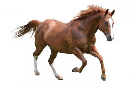 一匹奔跑的骏马图片png免抠素材