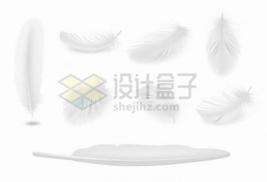 各种写真的白色羽毛png图片免抠矢量素材