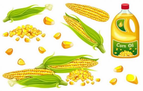 玉米棒玉米粒玉米油等玉米制品美食png图片免抠矢量素材
