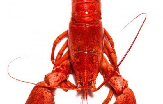 一只张牙舞爪的小龙虾图片免抠素材