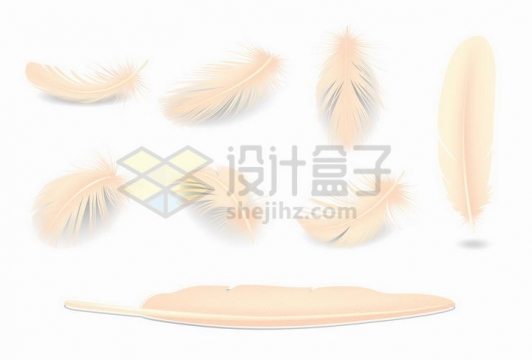 各种写真的黄色羽毛png图片免抠矢量素材