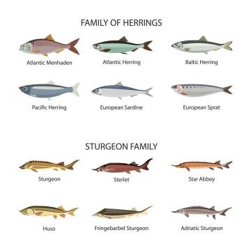 12款各种鱼类食用鱼侧视图免抠矢量图片素材