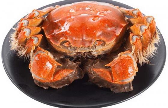 一只好看好吃的清蒸大闸蟹美味河蟹河鲜美食图片免抠素材