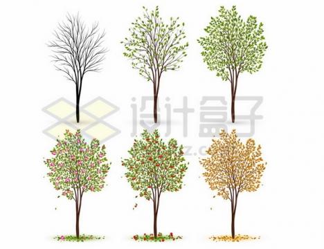 大树从冬天到春天夏天秋天一年四季的树叶发芽落叶情况301615png图片素材
