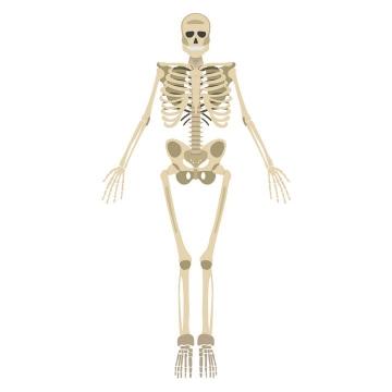 扁平化风格人体骨骼骷髅图片免抠素材