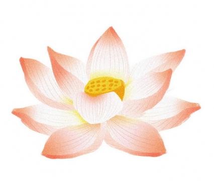 手绘风格盛开的莲花荷花图片免扣素材