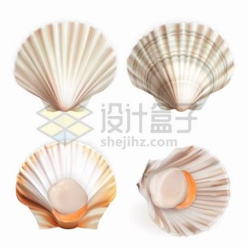 4款逼真的扇贝海鲜贝壳png图片免抠矢量素材