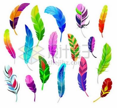 各种彩色图案的羽毛鸟毛png图片素材