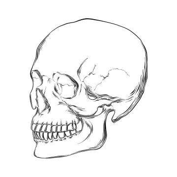 手绘线条素描风格骷髅头简笔画图片免抠素材