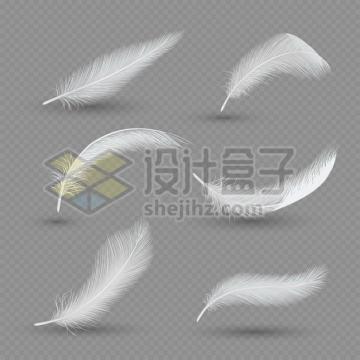 6个逼真的轻飘飘白色羽毛鸟毛png图片素材