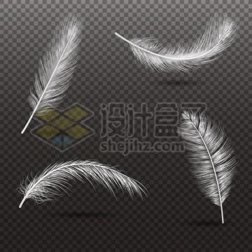 4个逼真的轻飘飘白色羽毛鸟毛png图片素材