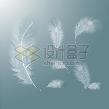6个逼真的轻飘飘白色羽毛绒毛鸟毛png图片素材