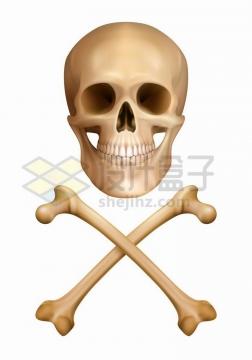 人体骷髅头和交叉的骨头png图片免抠矢量素材