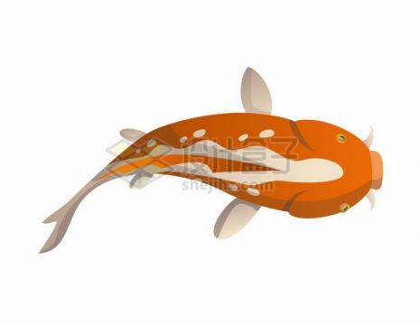 俯视视角的橙色卡通鲤鱼锦鲤png图片免抠矢量素材
