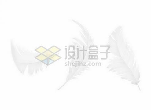 3款逼真的白色羽毛鸟毛png图片素材