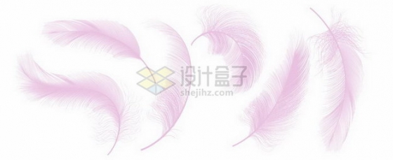 6款逼真的轻飘飘粉红色羽毛鸟毛png图片素材