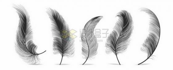 5款逼真的轻飘飘黑色羽毛鸟毛png图片素材
