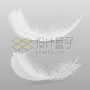 2款逼真的轻飘飘黑色羽毛鸟毛png图片素材