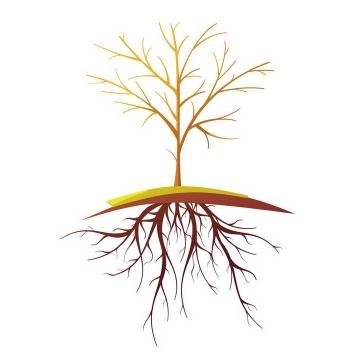 一棵没有树叶的大树和树根图片免扣素材