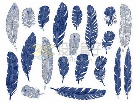 各种蓝色线条羽毛鸟毛png图片素材