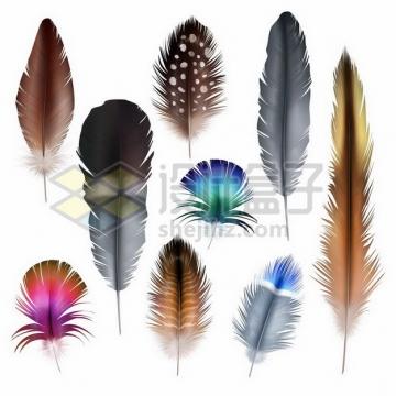 9款彩色绚丽的鸟类羽毛png图片素材