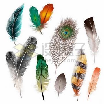 各种绚丽的鸟类羽毛孔雀羽毛png图片素材