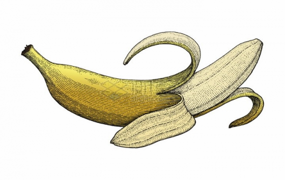 剥开皮的香蕉彩色手绘素描插画png图片免抠矢量素材